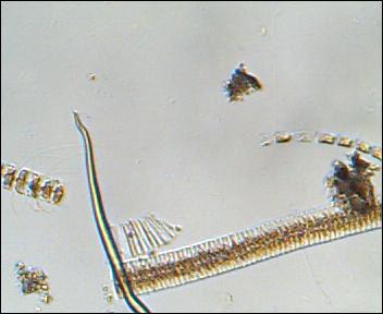 plankton1.jpg