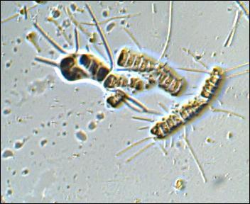 plankton14.jpg